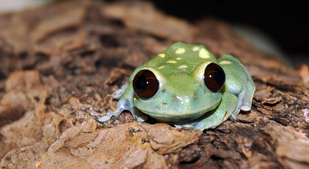 Pictures of amphibians - photo#6