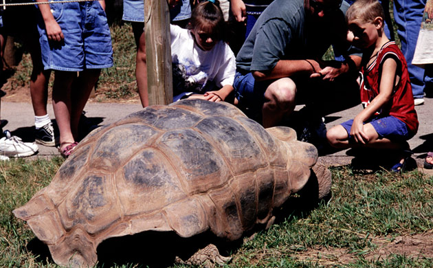 Giant Tortoise Yard