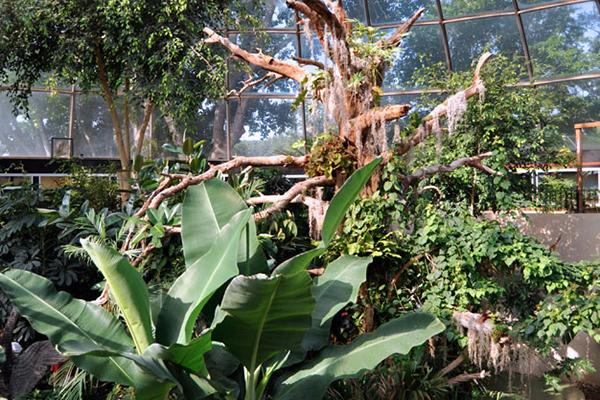 Wild Animal Park | Black Hills attraction | Reptile Gardens