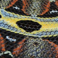 Worlds Deadliest Snakes