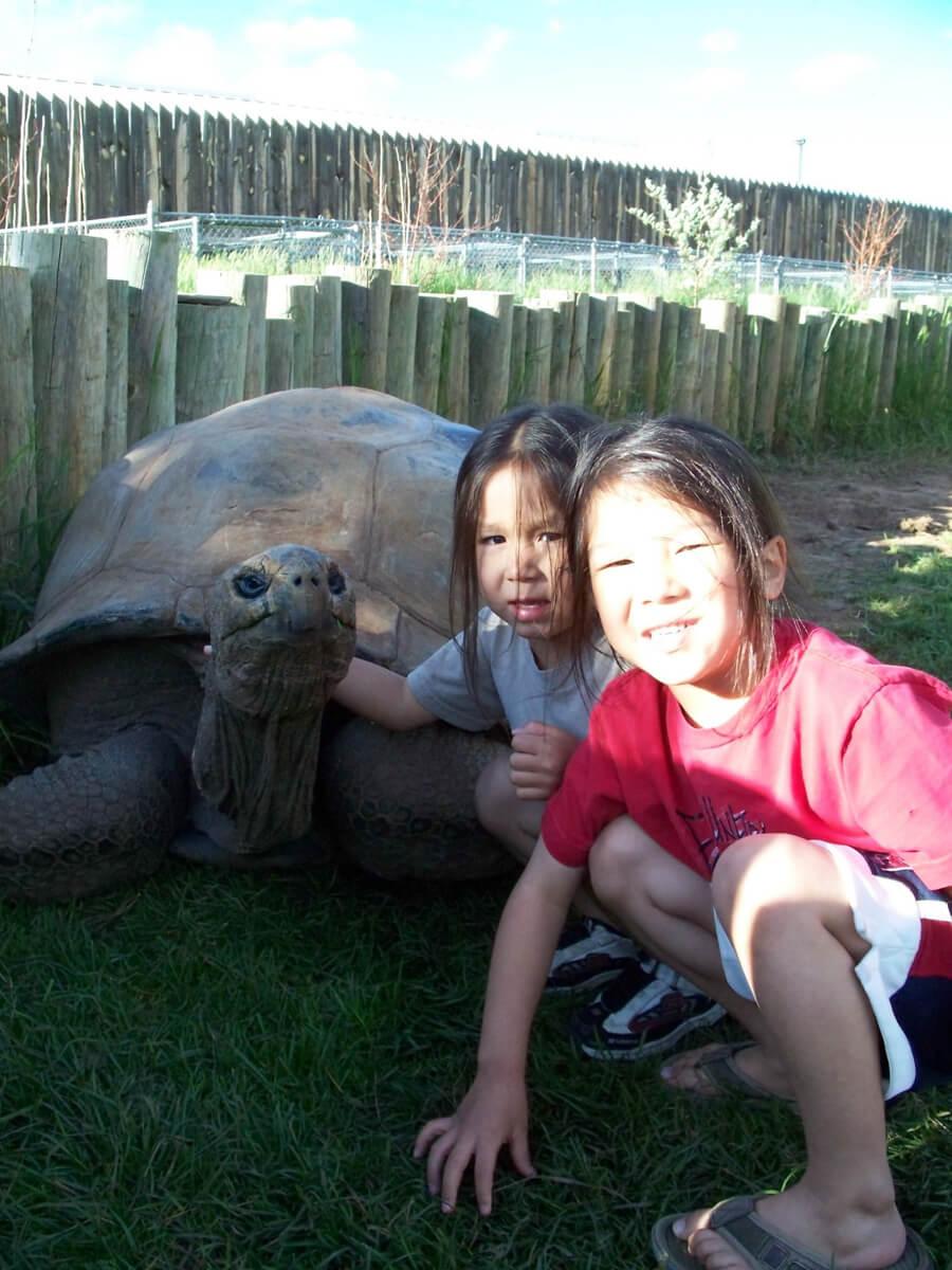 Kids love our Giant Tortoises