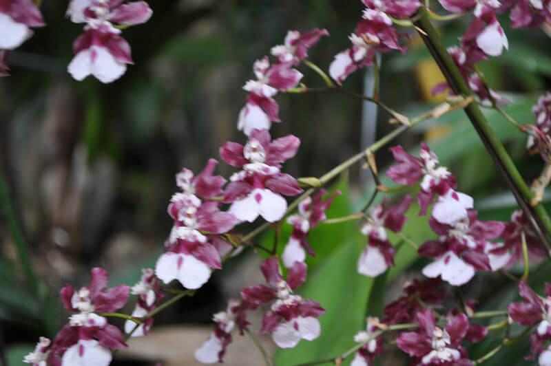 0810-orchid-10.jpg