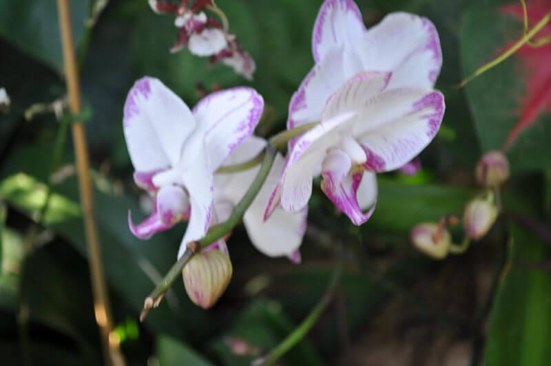 0810-orchid-2.jpg