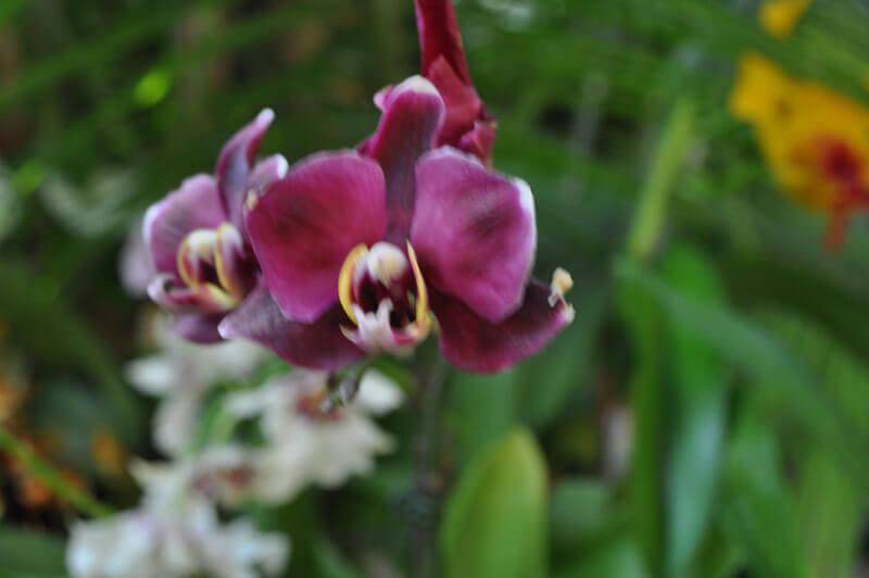 0810-orchid-20.jpg