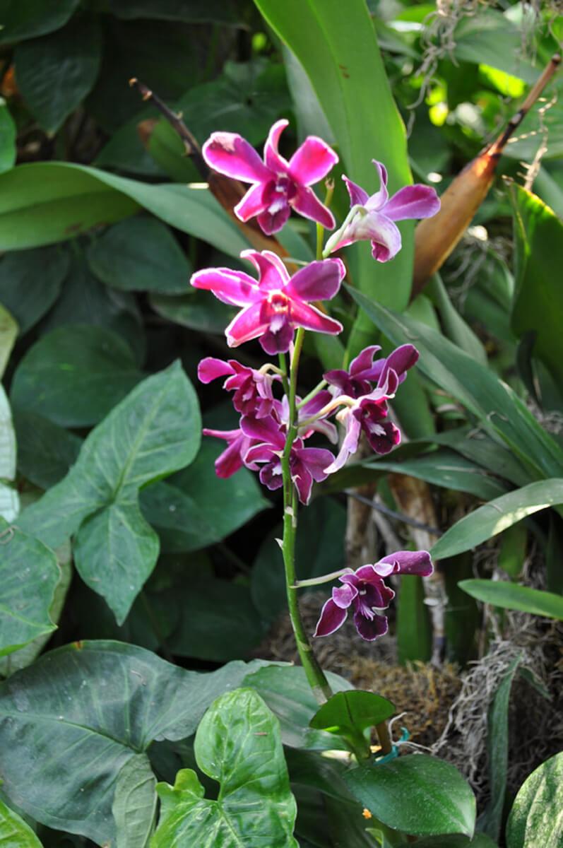 0810-orchid-4.jpg