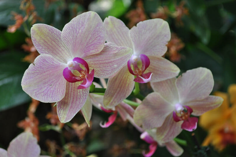 0810-orchid-5.jpg