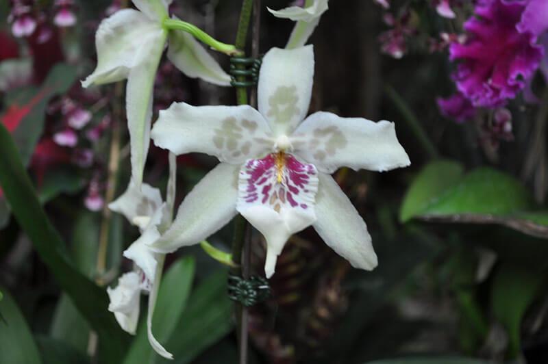 0810-orchid-7.jpg