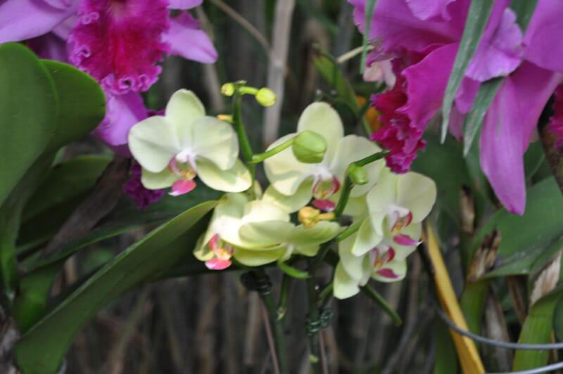 0810-orchid-9.jpg