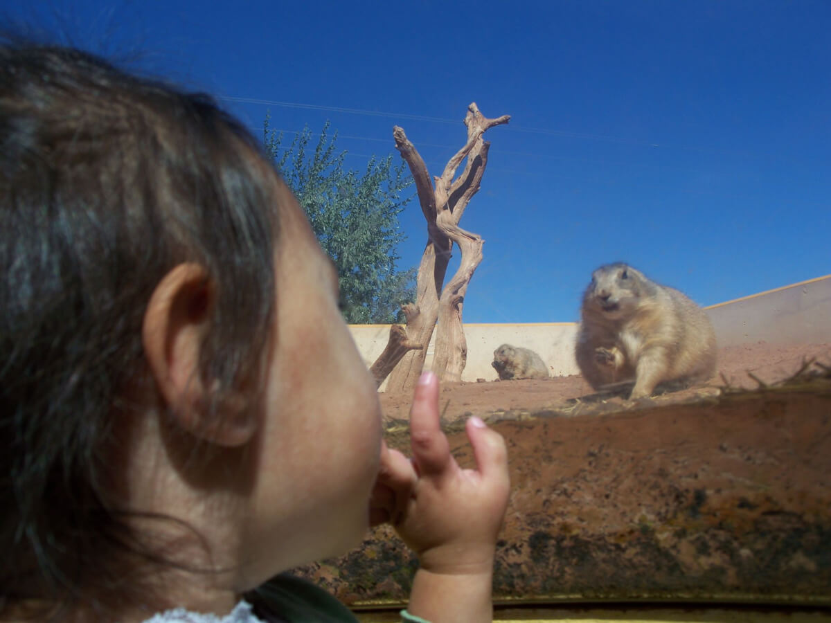 Image of a little girl inside the underground bubble and she is ground level with a prairie dog.