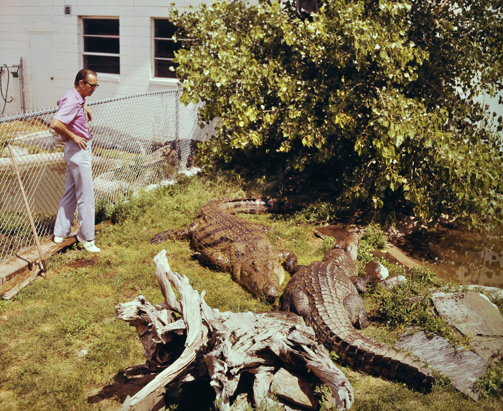1968a-earl-gator.jpg