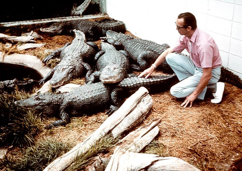 1968b-earl-gator.jpg