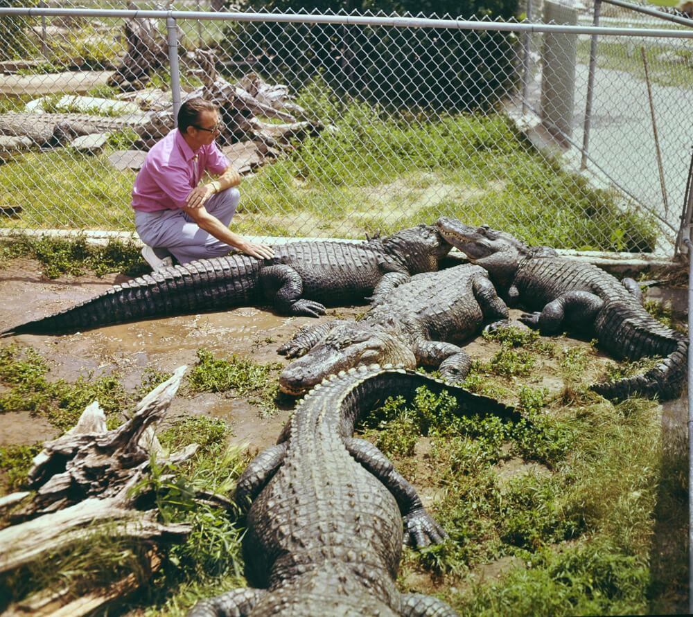 1968c-earl-gator.jpg