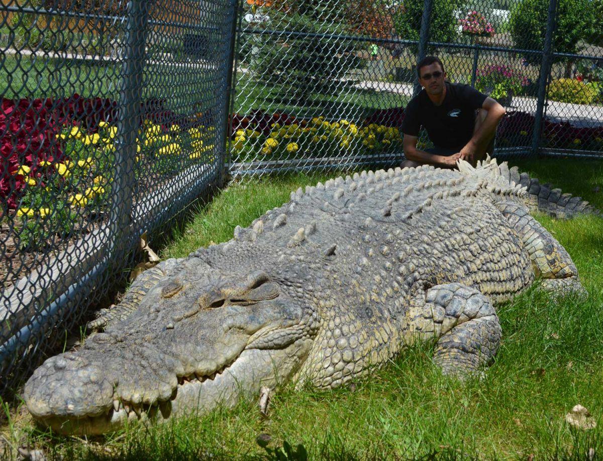 выбрать подходящий самый большой крокодил в мире фото давно