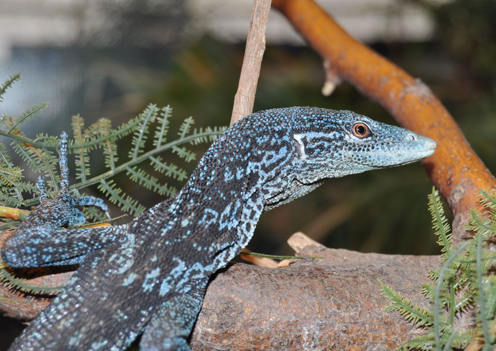 Blue Tree Monitor