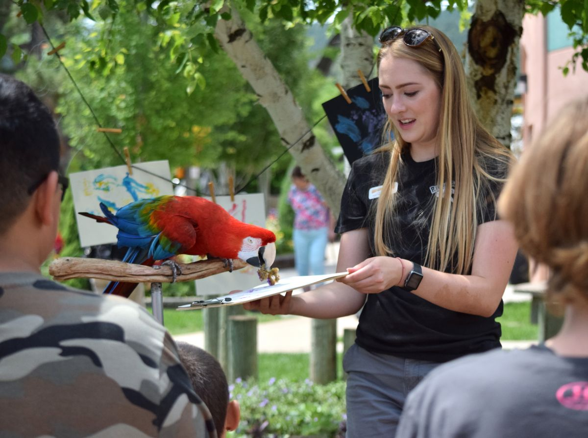 Image of a macaw painting with a sponge, helped by a staff person
