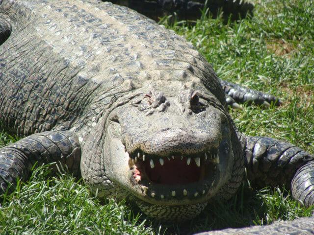 Nice Teeth