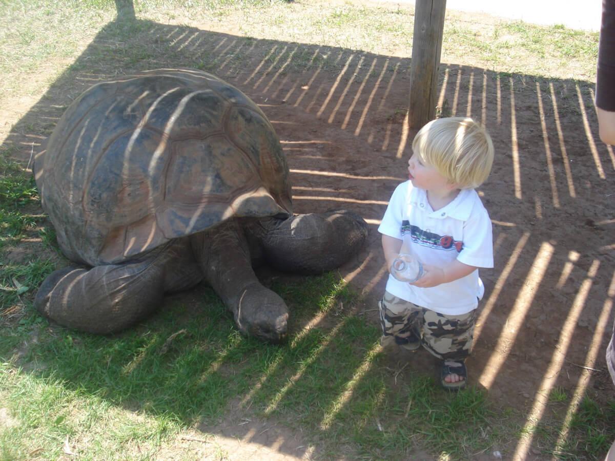 Joshua and the Tortoise