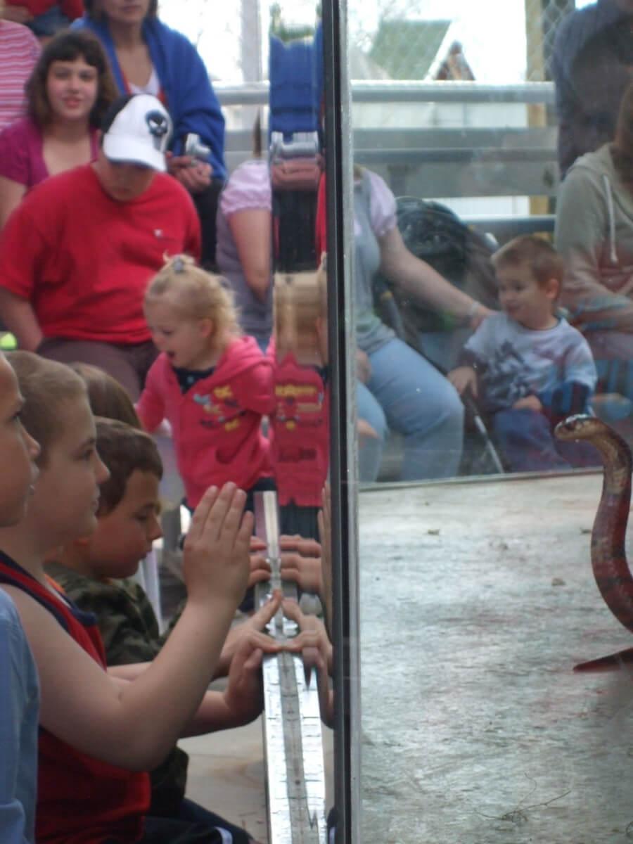 Kids & Cobra