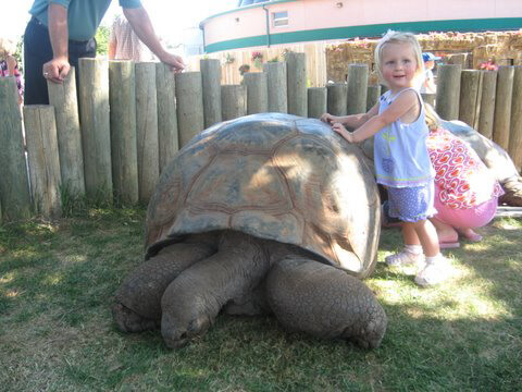 Image of a toddler girl standing next to a tortoise who is almost as tall as her!