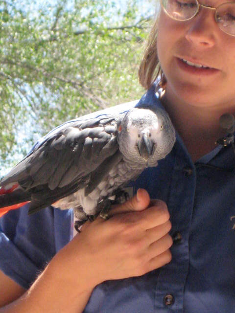 Image of a Reptile Gardens bird keeper holding a bird on their wrist.