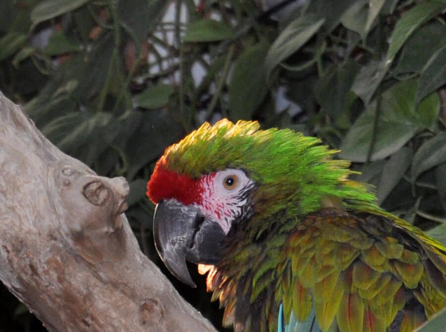 Sky Dome Macaw