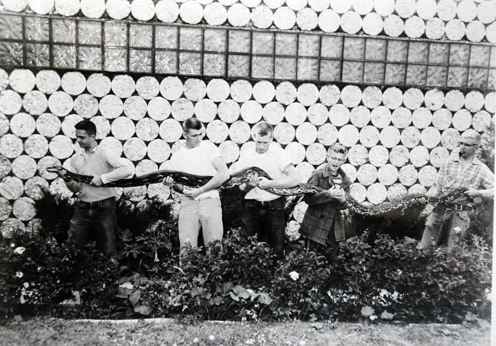 python-big.jpg