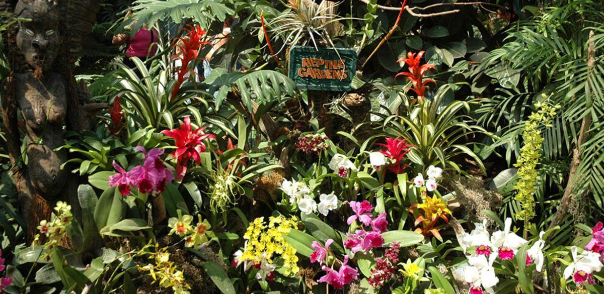 Flower Gardens | Gallery | Reptile Gardens