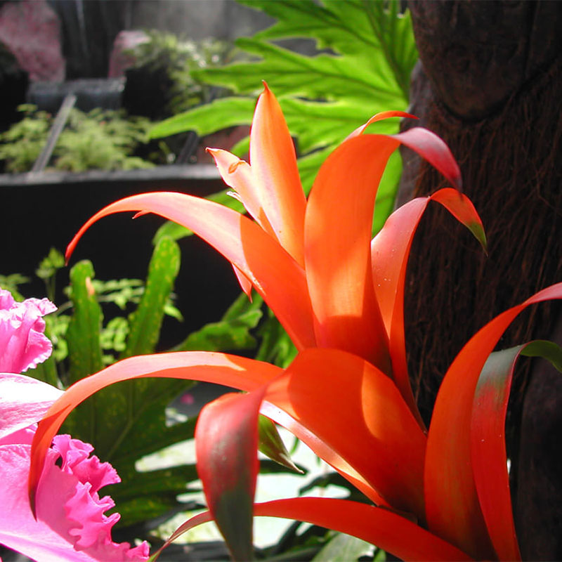 Flower 006
