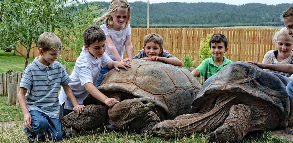 Tortoises-001