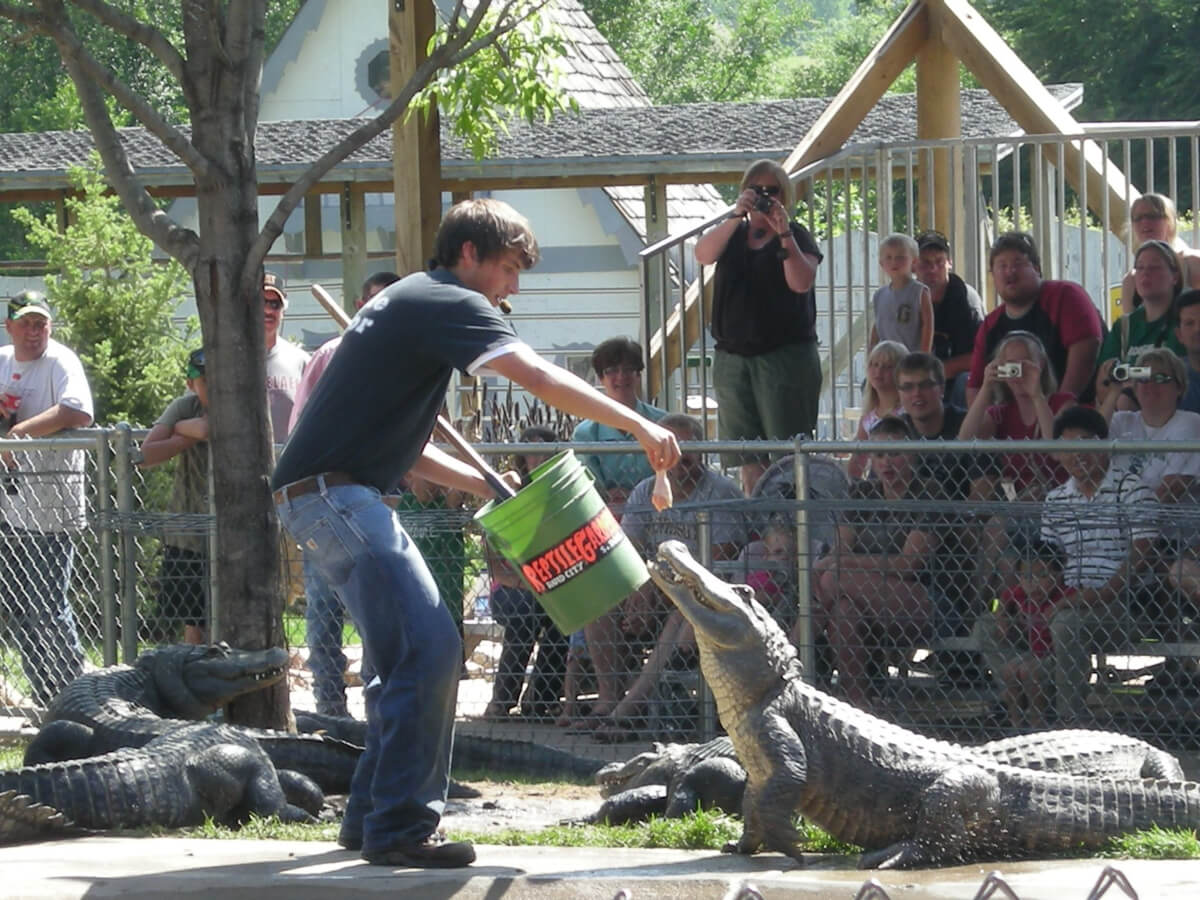 Watch the Gator Show