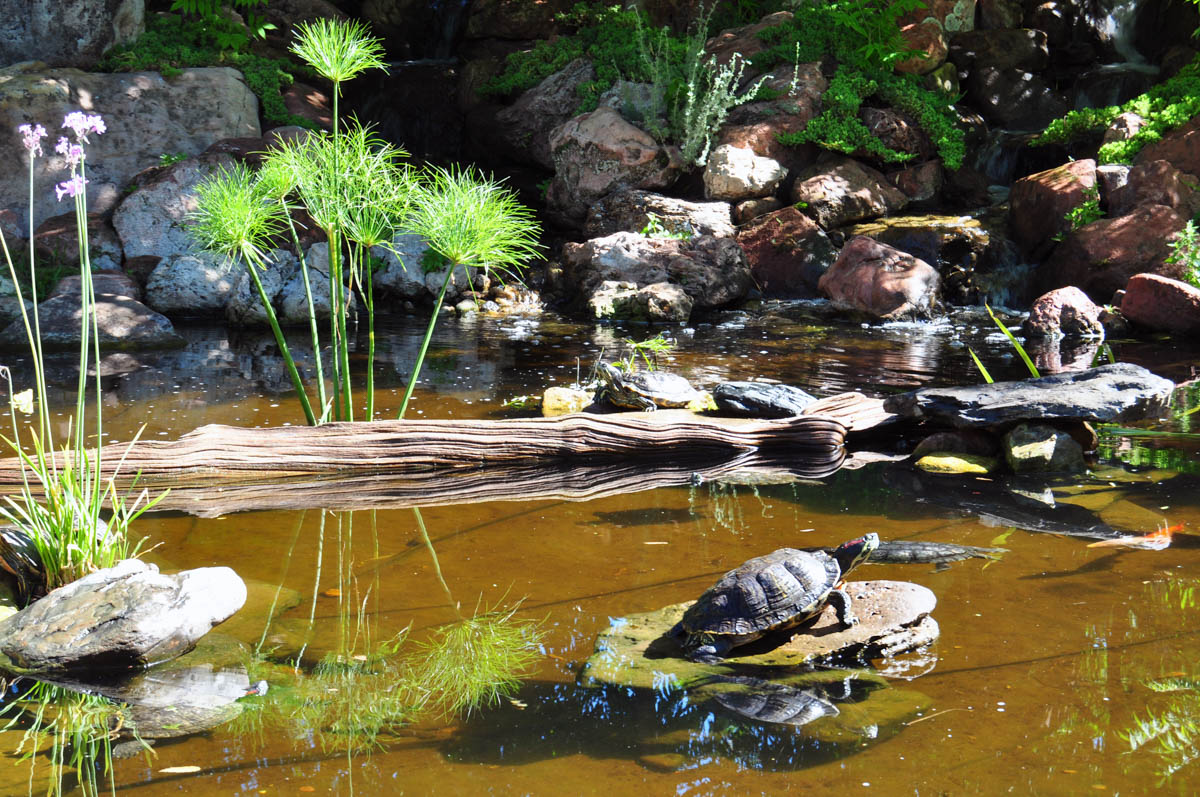 Turtle Pond at Tortuga Falls