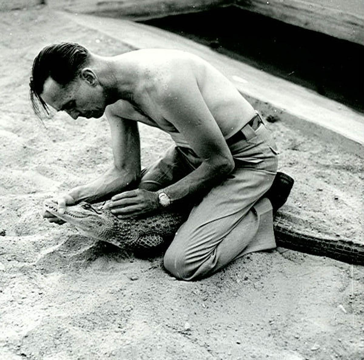 Gator Show Historic Photos
