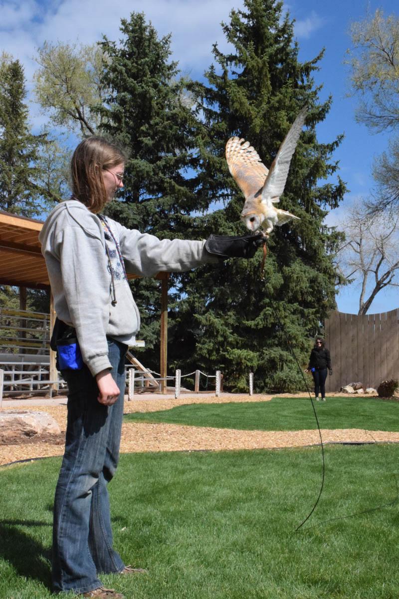 Nova the European Barn Owl at the Bird Show