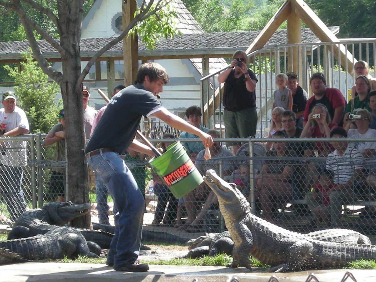 Reptile Feeding Gallery Reptile Gardens