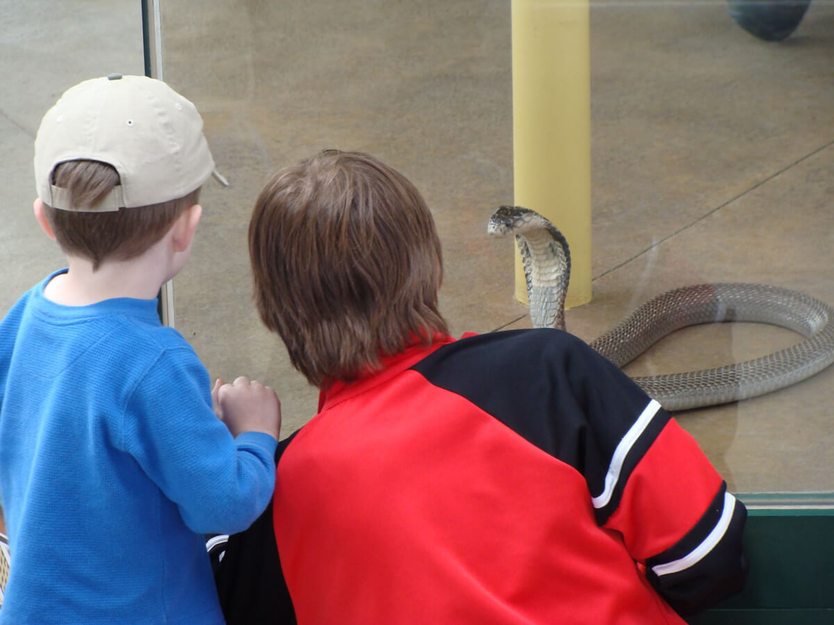 Image of two children looking behind glass at a snake on display.