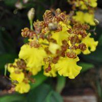 0810-orchid-1.jpg