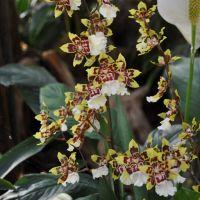 0810-orchid-13.jpg