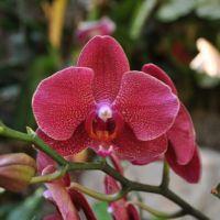 0810-orchid-17.jpg