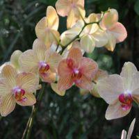 0810-orchid-18.jpg