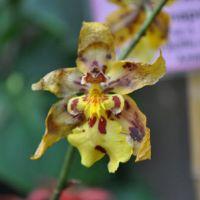 0810-orchid-22.jpg