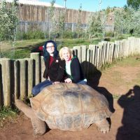 Take your photo with our Giant Tortoises