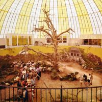 1965-skydome-safariroom.jpg