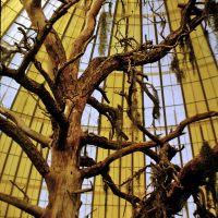 1965a-skydome-tree.jpg