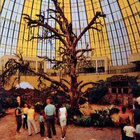 1965b-skydome-tree.jpg