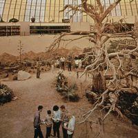1966-skydome-safariroom.jpg