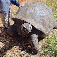 Turtles and Tortoises