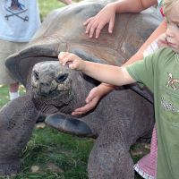 Our Giant Tortoises love neck scratches