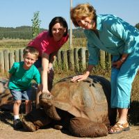 Methuselah, the Giant Galapagos Tortoise
