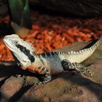 Types of Lizards | Reptile Zoo | Reptile Gardens | Reptile Gardens