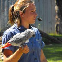 Bird Show African Grey Parrot